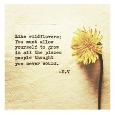 Like wildflowers; you must allow yourself to grow in all the places people thought you never would. - E.V