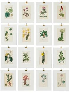 Pattern & Illustration: Fascinating Foliage :: Blog - Scott Group Custom Carpets