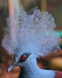 pássaro azul parece ter cabelo - Pesquisa Google
