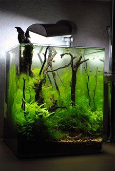 883 best aquascaping planted tanks aquariums images in 2019