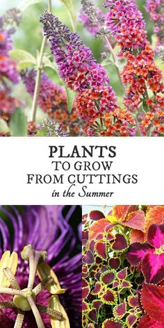 18 Best Plants to Grow from Cuttings in the Summer Summer is the time to root cuttings from favorite garden plants. It's an inexpensive and easy way to have more of your favorites. Easy Garden, Summer Garden, Lawn And Garden, Garden Ideas, Garden Arbor, Summer Plants, Garden Hose, Patio Ideas, Indoor Garden