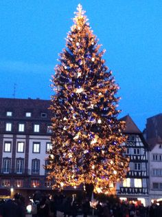 Christmas Tree, Strasbourg