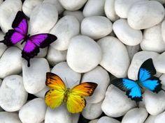 Piedras blancas y coloridas mariposas