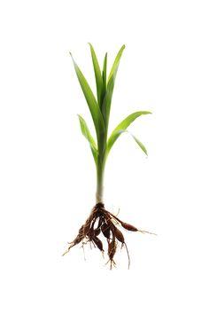 new growth (mary jo hoffman)