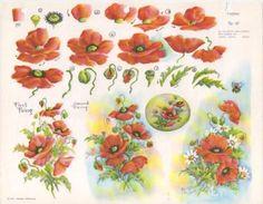 Gladys Galloway China Painting Study No 10 Poppies Pattern Instructions | eBay