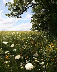 Beautiful meadow for Jessie and Gemma to laze about in with a good book.