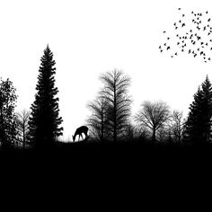 I feel the high contrast nature of silhouettes is definitely a feature to consider for the poster. I think its use will allow for a more professional look than I would otherwise be able to create. Used with colour it can also create stunning designs that emphasis distinct feelings and desires to reconnect with nature.