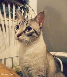 Crystal cat #cat #crystal #crystaleye