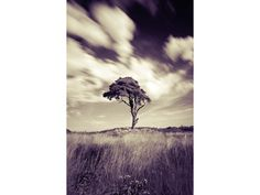 20 free Photoshop actions for black and white landscapes