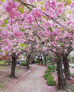 This Japanese Garden In Ontario Has Weeping Cherry Blossoms That Will Take Your Breath Away - Narcity