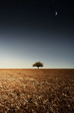 Lonely tree by Bessi  on 500px