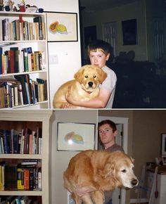 20 ภาพ Before&After ของเหล่าเพื่อนซี้สี่ขา | สัตว์โลกน่าเลิฟ