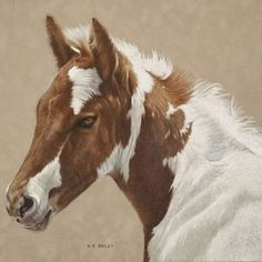 Lovely paint foal by Helen Bailey. #helenbailey #helenbaileyart #equine #art #equineart #equestrian #buckskin #fineart #contemporaryart