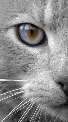 Silver kitty. I could disappear into the magic of this kitty.`