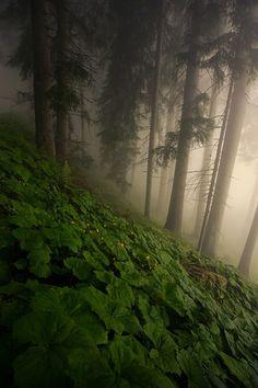 "purebushcraft: "" forestland: "" 90377: ""  … by Venislav Georgiev "" This is beautiful "" Gorgeous """