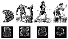 A new study finds that bone joint density remained high throughout human evolution spanning millions of years, until it decreased significantly in recent modern humans, probably as a result of an increasingly sedentary lifestyle. From left to right: modern chimpanzee, Australopithecus, Neanderthal, and modern human.