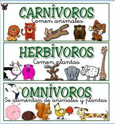 JUEGO. Clasificando por carnívoros, herbívoros y omnívoros. | Pearltrees