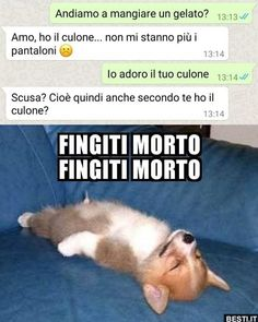 Andiamo a mangiare un gelato Funny Animal Memes, Dog Memes, Funny Jokes, Funny Chat, Italian Memes, Funny Twilight, Savage Quotes, Funny Pins, I Laughed