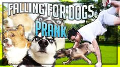 FALLING FOR DOGS PRANK! Why fall in love when you can fall in dg? #pranks #funny #prank #comedy #jokes #lol #banter