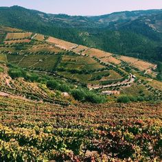 Entering the Douro Valley! #Portugal #portuguesefood #PortugalFoodStories #portuguesewine #douro #dourovalley