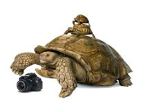 camera and tortoises