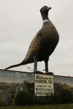 The Biggest Pheasant in the World.....Huron, South Dakota