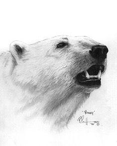 drawings of polar bears Pencil Art Drawings, Easy Drawings, Animal Drawings, Drawing Sketches, Drawing Ideas, Polar Bear Drawing, Polar Bear Illustration, Bear Sketch, Bear Art