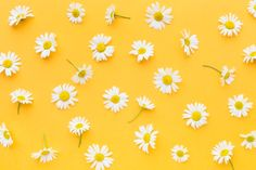 Yellow laptop mock-up | Premium Photo Daisy Wallpaper, Cute Desktop Wallpaper, Flower Phone Wallpaper, Computer Wallpaper, White Paper Flowers, Tiny White Flowers, Exotic Flowers, Pink Hydrangea, Pink Orchids