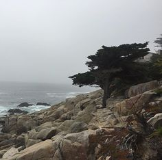 #monterey #california #montereybay #17miledrive #pebblebeach #pescadero #pescaderopoint #montereybaylocals - posted by Natalya Treukhova https://www.instagram.com/taallu - See more of Monterey Bay at http://montereybaylocals.com