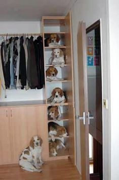 I've heard of pocket beagles but now we have cupboard beagles.   Thank you BEAGLES and Nigel Buggeas