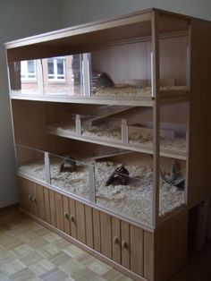 What do tortoises eat? Indoor Guinea Pig Cage, Guinea Pig House, Indoor Rabbit, Pet Guinea Pigs, Guinea Pig Cages, Chinchillas, Hedgehog Cage, Baby Tortoise, Tortoise Table
