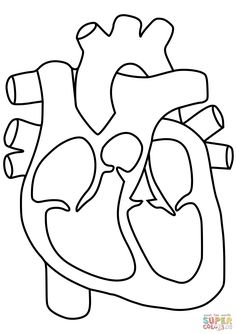 Human Heart Coloring Pages Science Circulatory System Page For Kids Pdf Lymphatic Simple Heart Diagram, Human Heart Diagram, Human Body Diagram, Human Heart Outline, Human Heart Drawing, Heart Coloring Pages, Free Printable Coloring Pages, Coloring Pages For Kids, Coloring Sheets