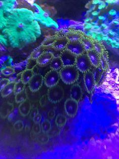 Coral Aquarium, Fish, Pets, Animals, Animales, Animaux, Pisces, Animal, Animais