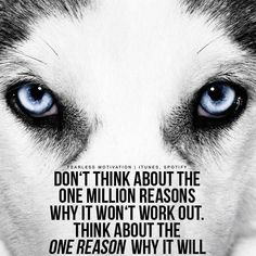 Wolf Quotes wolf quotes and sayings Wolf Quotes. Wolf Quotes 97 exclusive wolf quotes that will leave you speechless keep silent you still gonna get found wolf quotes wolf quotes spirit . Motivational Quotes In English, English Quotes, Great Quotes, Inspirational Quotes, Motivational Videos, Motivational Speeches, Wolf Pack Quotes, Lone Wolf Quotes, Wolf Qoutes
