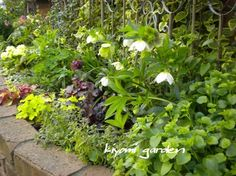 Green Garden, Green Plants, Green Flowers, Summer Garden, Shade Garden, Home And Garden, Garden Planning, Garden Paths, Perennials