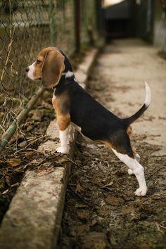 Собачье Сердце– Сообщество– Google+