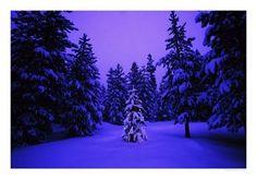 Bilder til kort - Jul