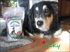 Healthy Dog Treats - Super Fan Beautiful Inky! http://www.greenbutterflybrands.com/