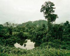 """Primärwald, Malaysia (aus """"Die Zukunft des Waldes"""")"""