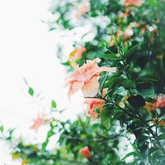 2016.04.26 #sony #sonyalpha #sonya7 #a7 #vscocam #vscoflowers #instaflower #flowers #commonlife_travel #okinawa