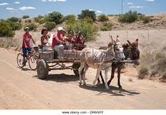 Image result for donkeys and cartt in south africa Wind Mills, Donkeys, African Art, Farm Animals, Flower Art, South Africa, Cart, Om, Abstract Art