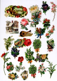 #Victorian #scrap #floral #botanical #bird #mandolin