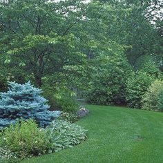 Our lawn problem solver offers up safe solutions for lawn weeds, pests, and diseases!