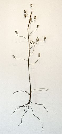 Ben Coutouvidis - Plant with alternating seed-cases, Wire sculpture