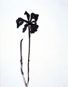Ellsworth Kelly, Siberian Iris, 1989, ink on paper, 29 3/4 × 23 in. Private collection, New York. Gift of the artist. © Ellsworth Kelly. Photograph Courtesy: The Metropolitan Museum of Art.