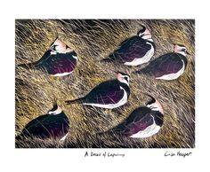 A Deceit of Lapwings - linocut - Lisa Hooper