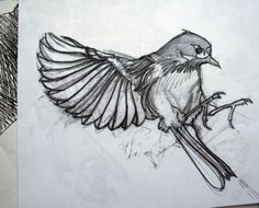 bird sketch - Google Search