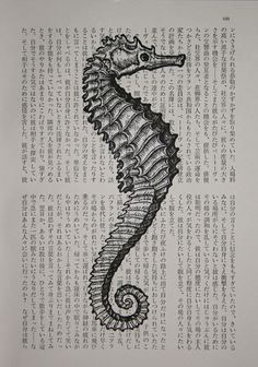 """I feel like someone got disenchanted when writing their novel and was just like """"hey, I'm gonna put a seahorse here""""."""