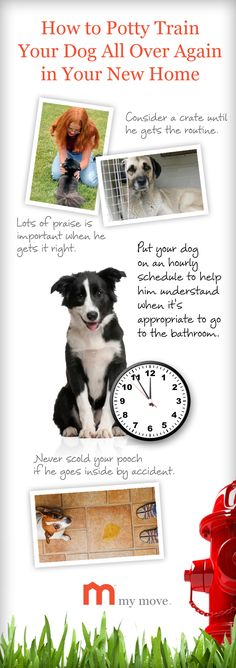 Learn how to potty train your dog in your new home.