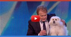 You�ll be Shocked and Perplexed When you see What This Man Got his Dog to do